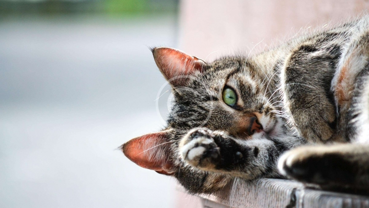 Hairballs and Cats: What Should I know?